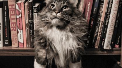 shelfcat