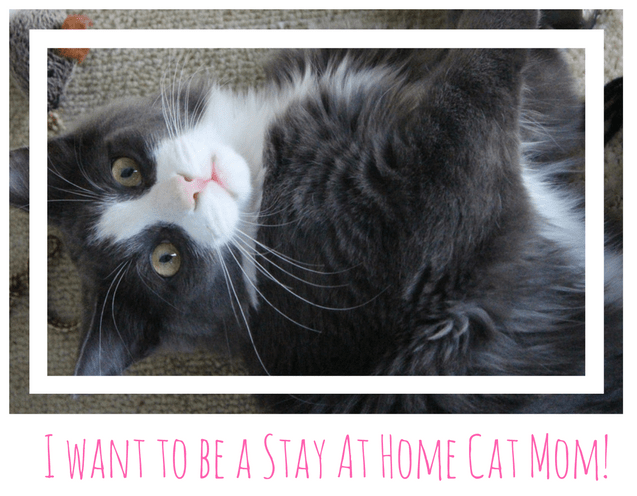 Become a Stay At Home Cat Mom with Stay At Home Cat Mom's weekly mewsletter and be the first to hear the mews!