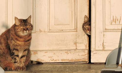 How to keep the peace in a mult-cat home