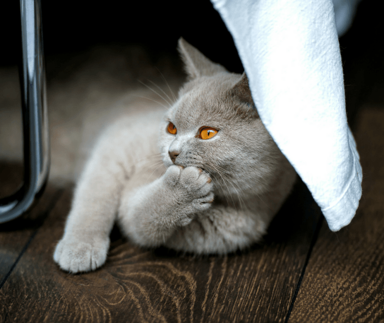 a clean cat is a happy cat.