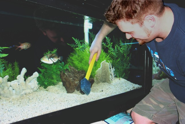 Image result for cleaning fish tank