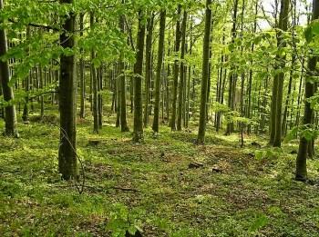 Šume iznad Grze