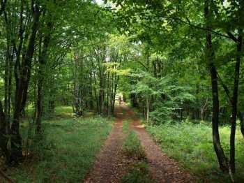 Kroz guste šume Štrpskog korita