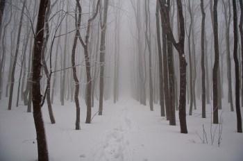 Kroz šumu na Malom Vukanu