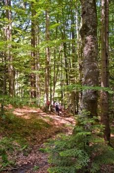 Tarske šume