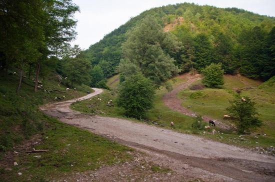Put uz Kozlicu ka Divčibarama