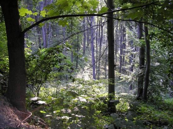 Šume oko Starice leti