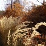 Pozna jesen na Vidojevici
