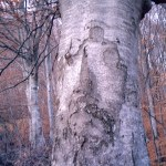 Prikaz Bogorodice na kori stabla