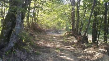 Šumski put uz Stubicu