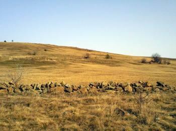 Cicovića polje