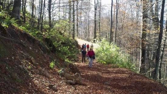 Staza kroz bukovu šumu