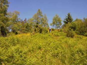 Vrh Ober, najviši vrh Javorja