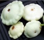 Summer Squash - White Bush Scallop - St. Clare Heirloom Seeds