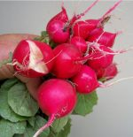 Radish - Cherry Belle - St. Clare Heirloom Seeds