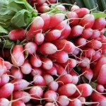 French Breakfast Radish - St. Clare Heirloom Seeds