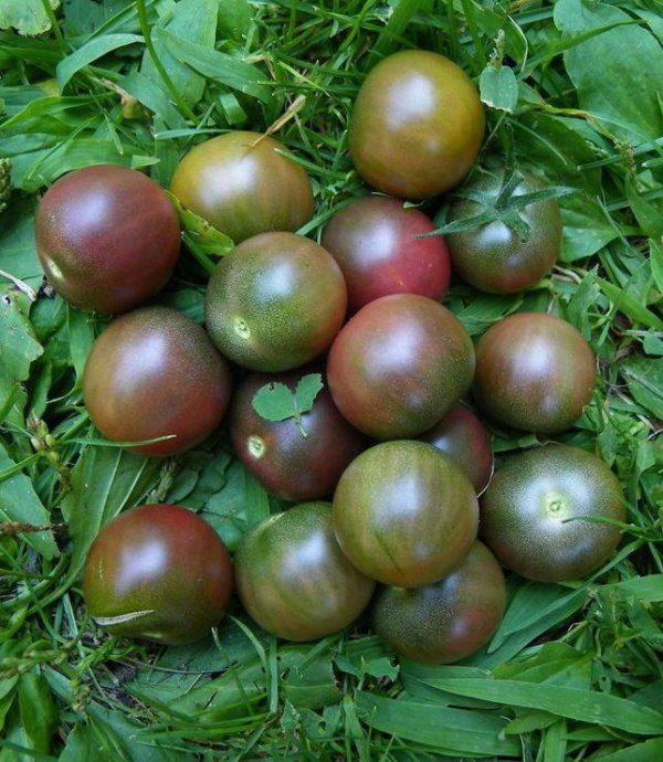 Tomato, Cherry - Black Cherry - St. Clare Heirloom Seeds