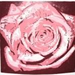 Shower of Roses
