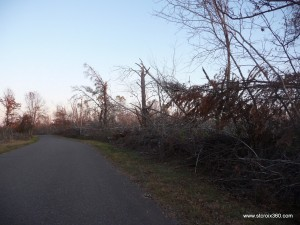 Storm damage at St. Croix State Park, October 2011, photo by Katie Seitz