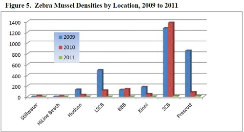 Chart showing decline in zebra mussels in the St. Croix River from 2009 to 2011