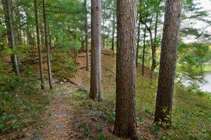 Pine Needles Property