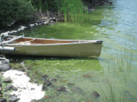 Algae bloom at Isle Royale (NPS photo)