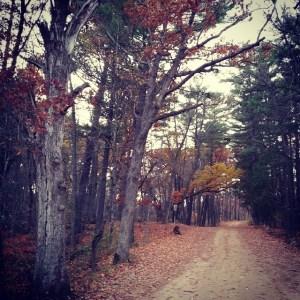 Log House Landing road, November 2013
