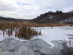 Frozen St. Croix River backwaters