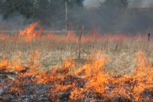 A prescribed prairie burn.