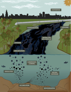 Processes affecting the composition, amount, and behavior of diluted bitumen.