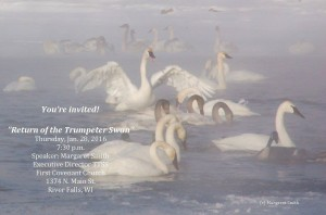 trumpeter-swans-presentation-margaret-smith