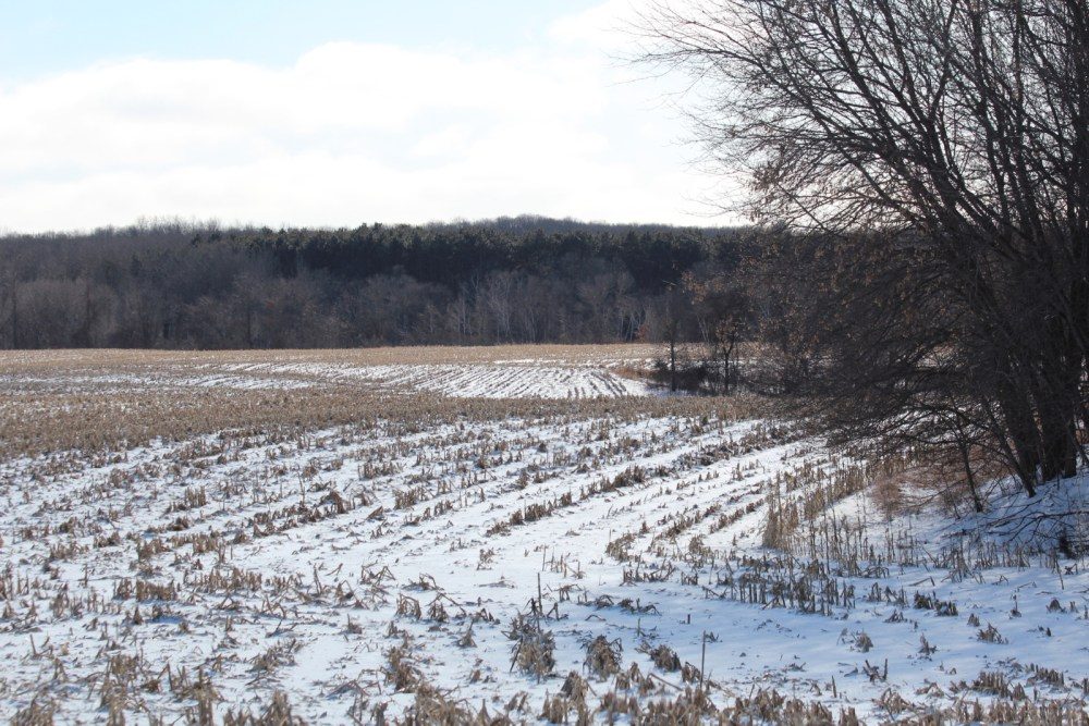 Farmland protected by the conservation easement