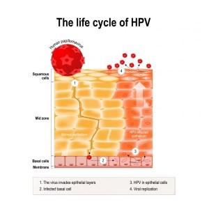 Wart Virus Diagram  17bbhzionsnowboardsde