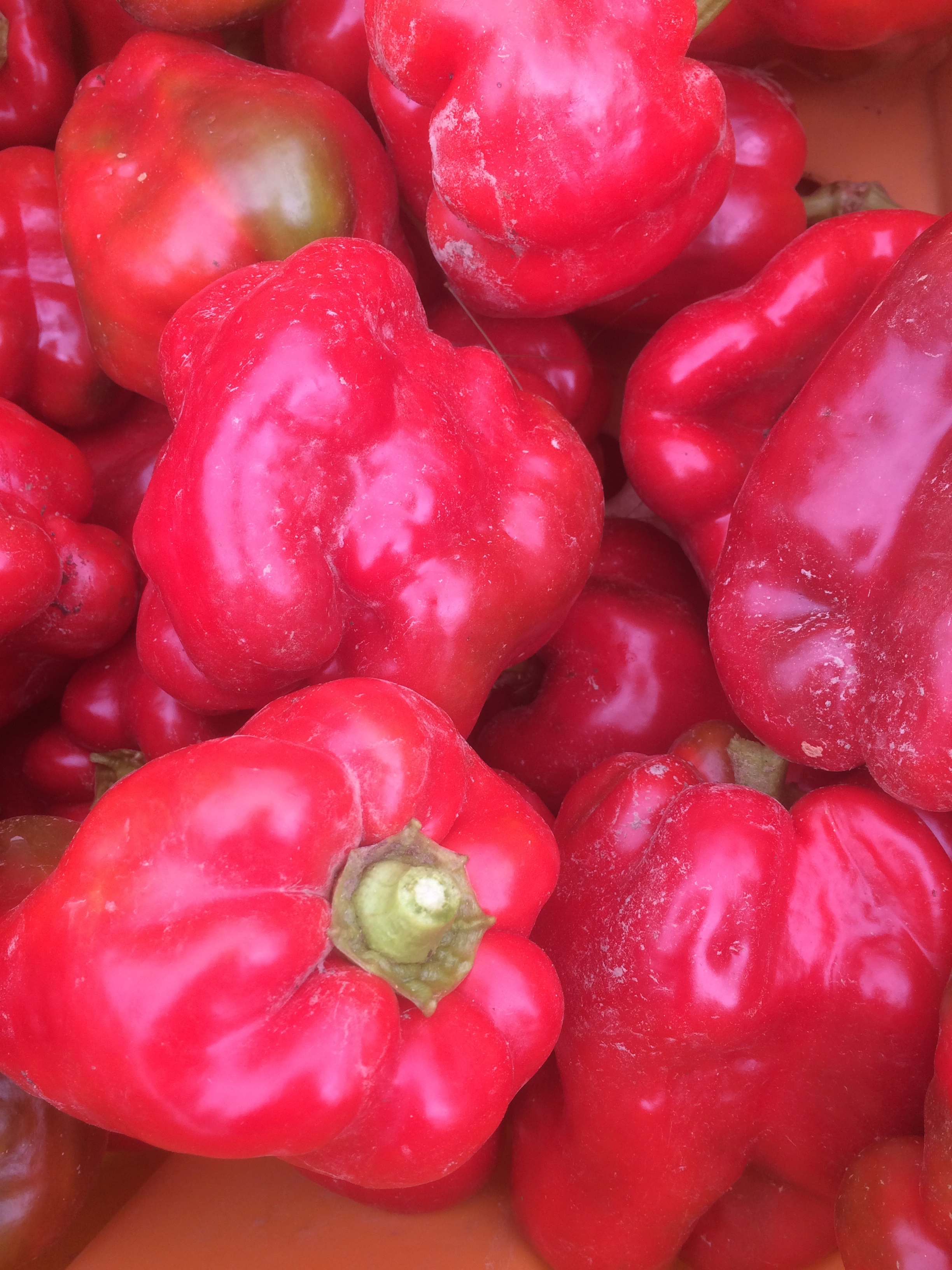 Red Bell Peppers in August