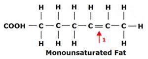 monounsaturated fat