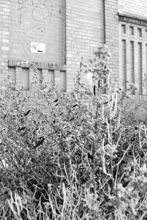 erbacce di fronte a un abbandono d'arte a Berlino