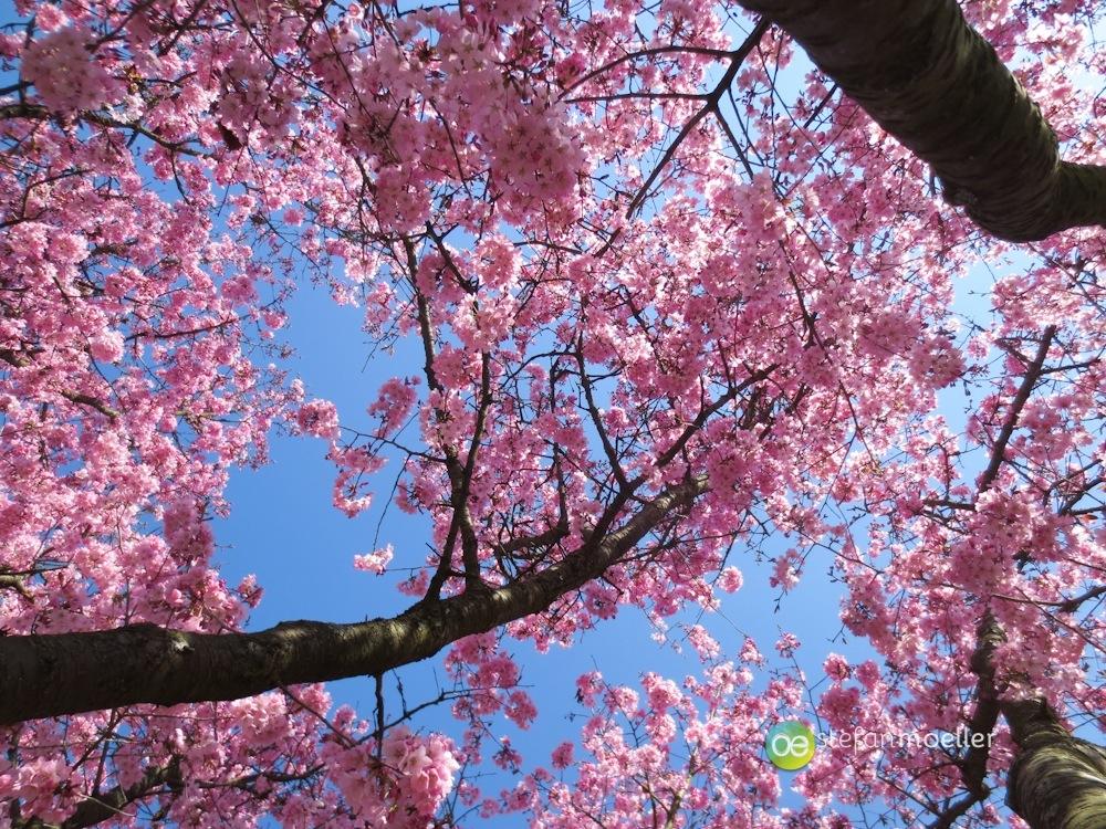 Frühling in Esslingen