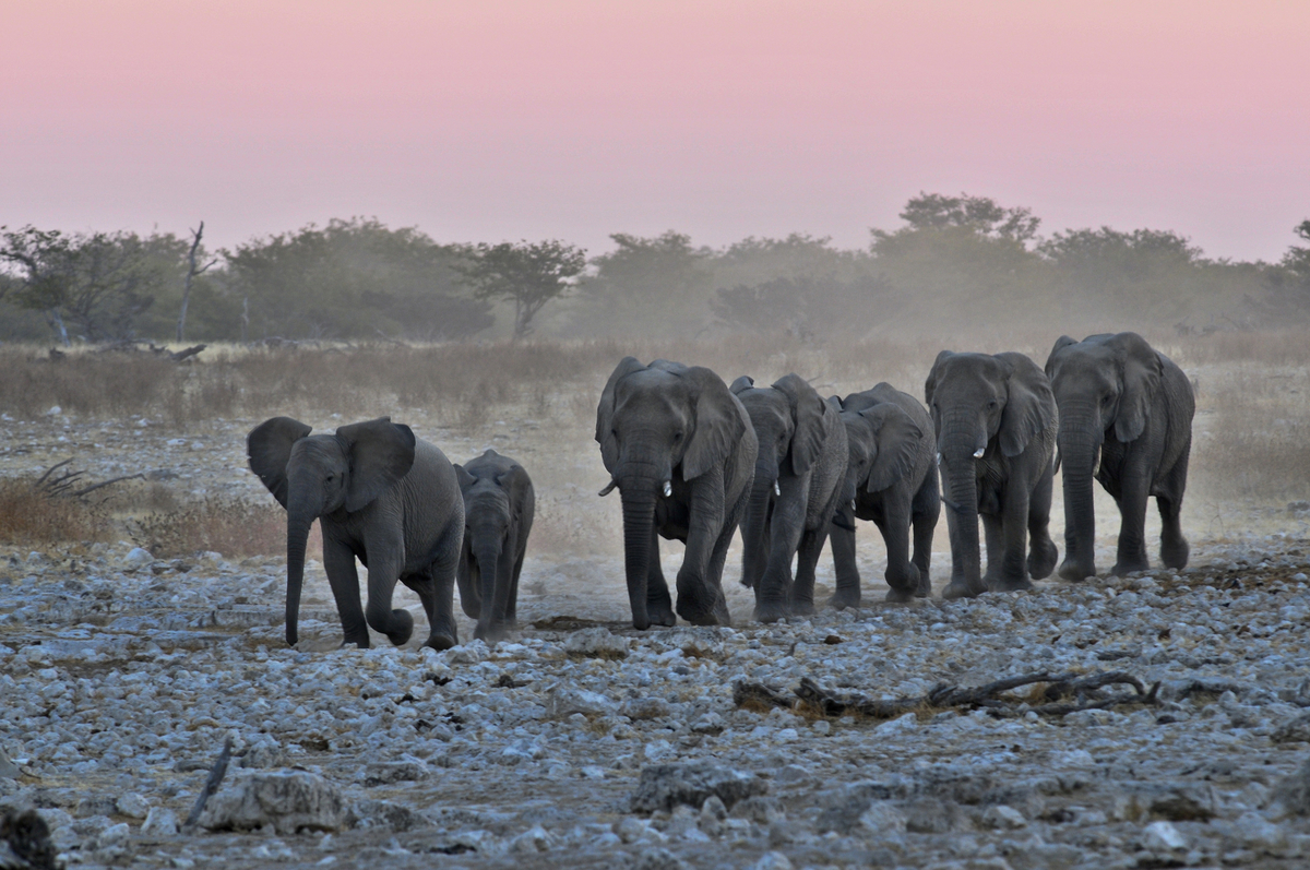 Namibia: Safari Dream