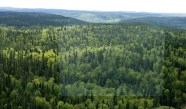 BOREAL-FOREST-4