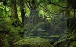 I boschi e le foreste creano ombra e microclima che consente alle acque di rinnovarsi e alla fauna di prosperare