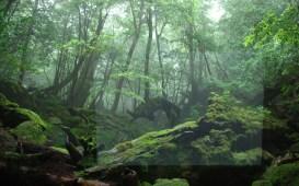 Fitta boscaglia che costituisce le nostre foreste, composta da alberi bassi e vegetazione rigogliosa