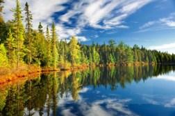Pini, abeti, aceri, larici, olmi... la nostra foresta ospitava una varietà enorme di specie arboree