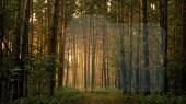 light-forest