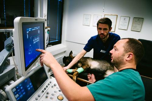 Fotografering av veterinärer på djursjukhus. Fotograf Stefan Tell