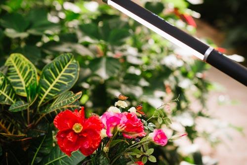 Ice-Light-för-makro-fotografering-fjärilar-blommor