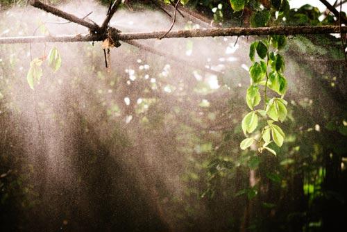 sprinklersystem-bakgrund-regnskog-fjärilshuset