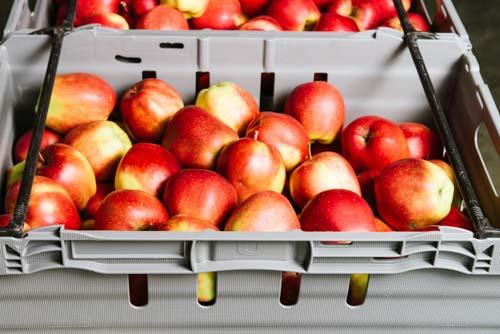 äpplen-låda-produktfotogrfering-on-location