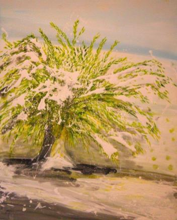 Spanish Landscape Olive Tree Snow
