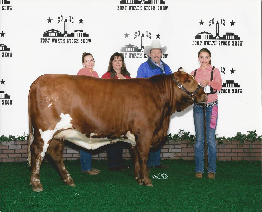 2014 Texas Stock Shows Steinhauser S