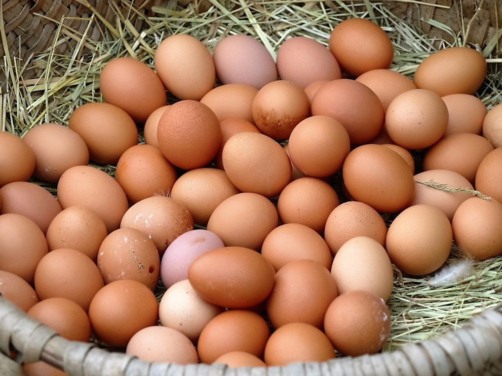 frische eier aus bodenhaltung unsere h hner arbeiten rund um die uhr steirerhof mieming. Black Bedroom Furniture Sets. Home Design Ideas